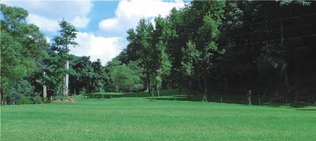 阿喜桂花園、桐花林