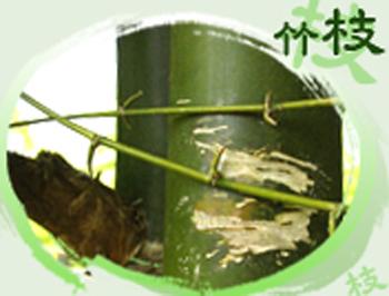 Image-竹枝