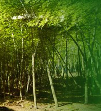 竹材的分類